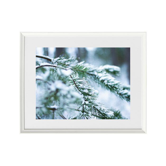 Foto glezna Priedes zari ziemā
